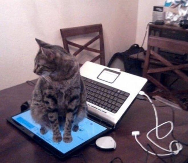 2124010-R3L8T8D-650-epic-galerie-20-images-qui-vous-prouvent-que-les-chats-possedent-leur-propre-logique-6
