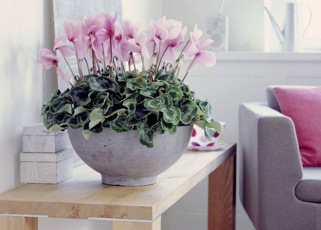 Цветущие комнатные культуры нуждаются в более тщательном и внимательном уходе, нежели декоративно-лиственные растения