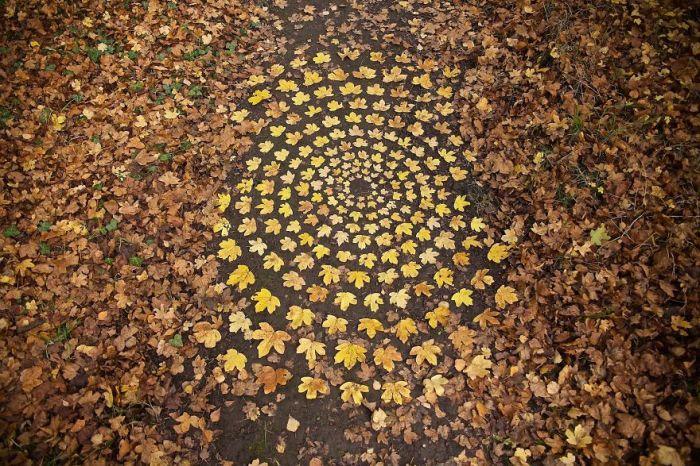 Осенний узор из опавших кленовых листьев, выложенный на земле.