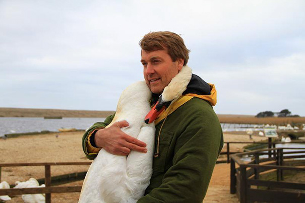 injured-swan-hugs-man-richard-wiese-born-to-explore-abbotsbury-swannery-16