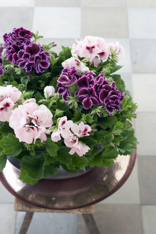 Некоторые вредные растения все же можно выращивать дома, при этом соблюдая меры предосторожности. поэтому они и остаются популярными и любимыми