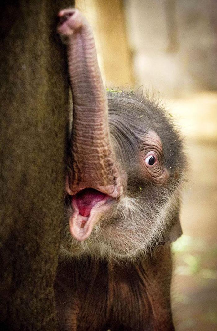 Детеныш слона