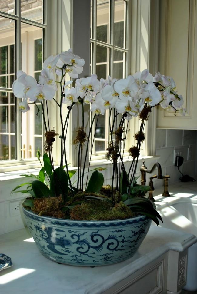 В просторный керамический горшок вы можете посадить несколько орхидей. Можете выбирать как однотонные цветы, так и разноцветные, получая оригинальные композиции для дополнения интерьера дома