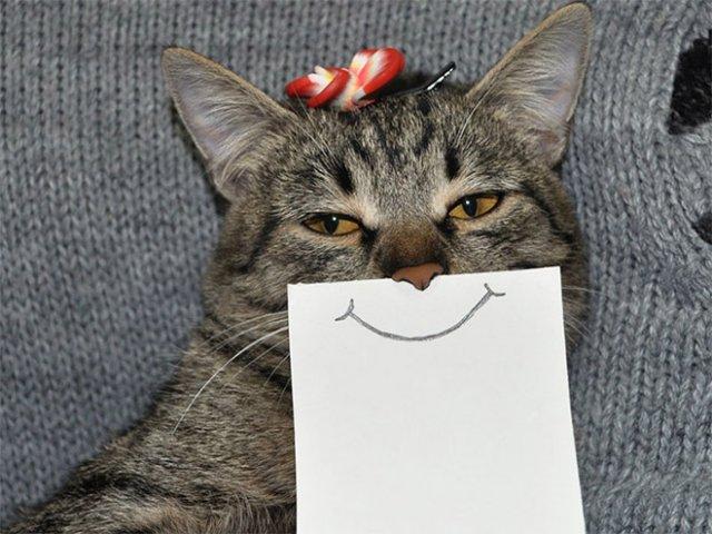 Очень смешные кошки с нарисованными ртами