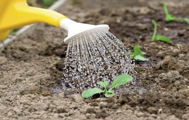 подкормка цветной капусты, удобрения для цветной капусты, чем подкормить цветную капусту, удобрения для рассады цветной капусты