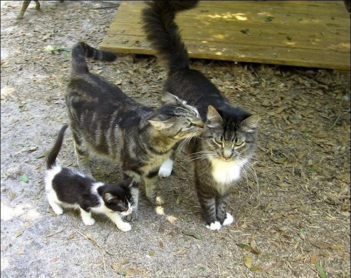 Кошачий рай животные, своими руками