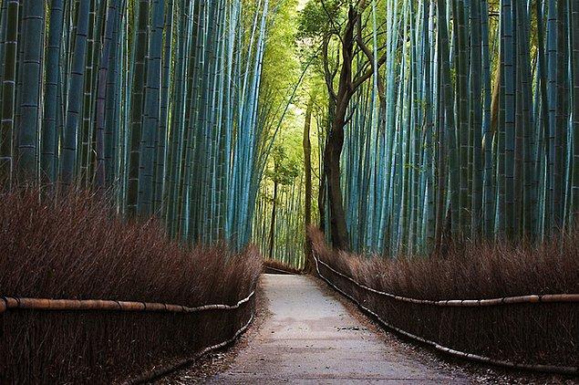Бамбуковый лес в Японии.
