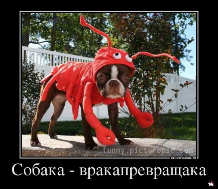 Показалось собака демотиваторы