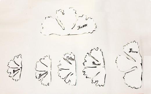 Схема вырезания лепестков пиона