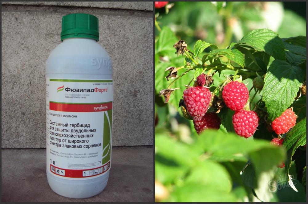 гербицид на бурякы от молочая Биология