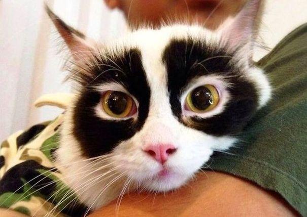 кошки с необычным окрасом, кошки с уникальной окраской