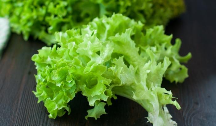 Салат латук накапливает много азотистых соединений.