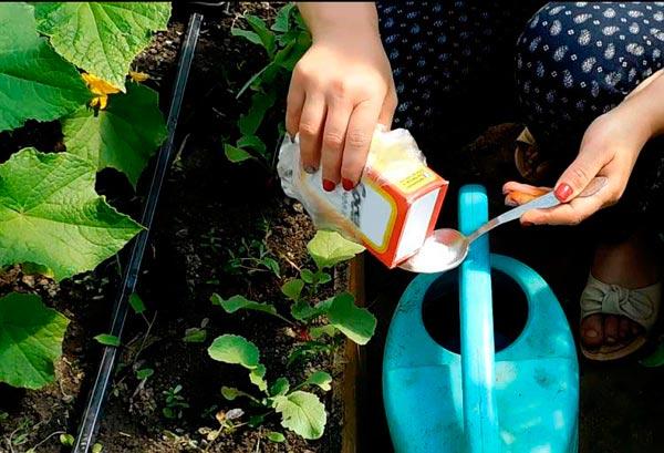 полив огурцов с содой