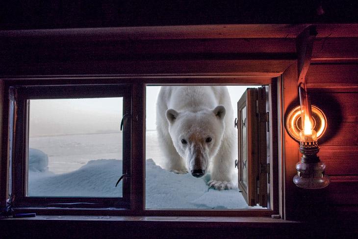 Невероятные фотографии животных Пола Никлена loverme