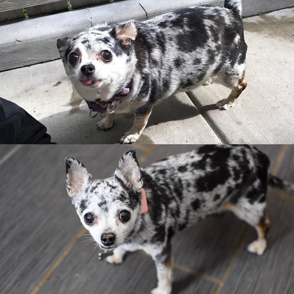Причина Похудения Собак. Почему собака худеет