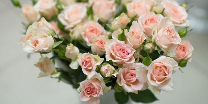 Розы кустовые фото с названием