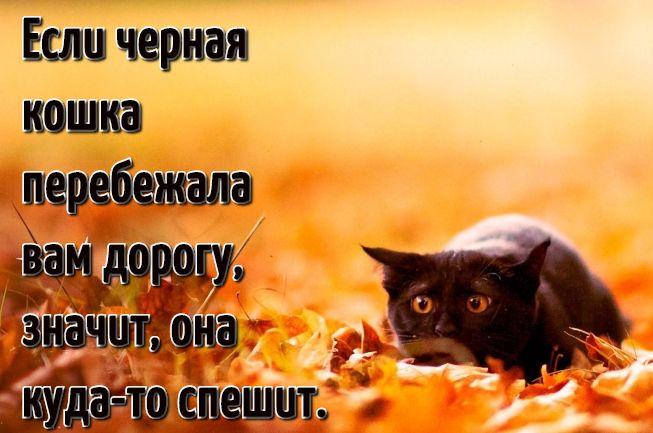Коты цитаты