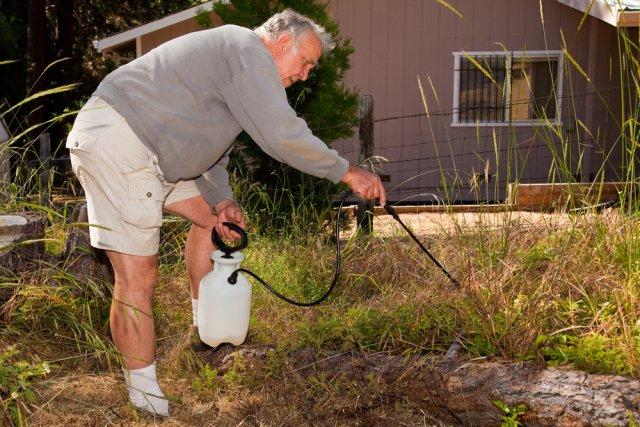 гербицидами уничтожать сорняки