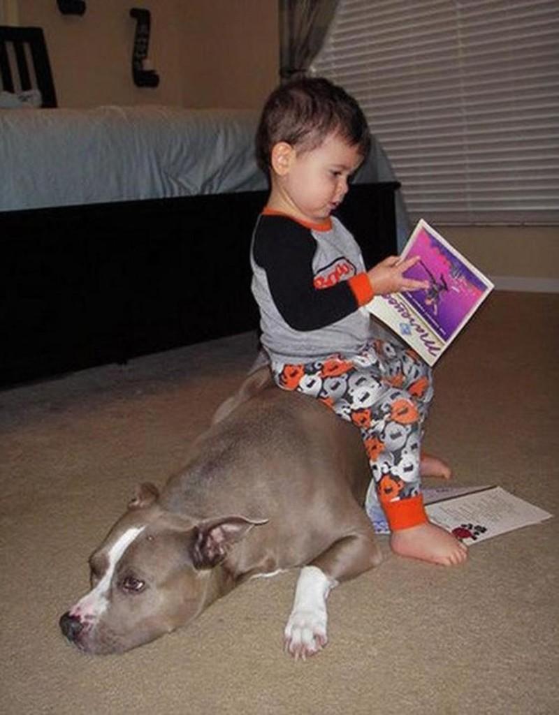 Смешные фото дети с животными, для