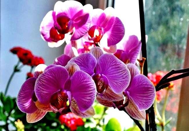 Как вылечить орхидею от гниения