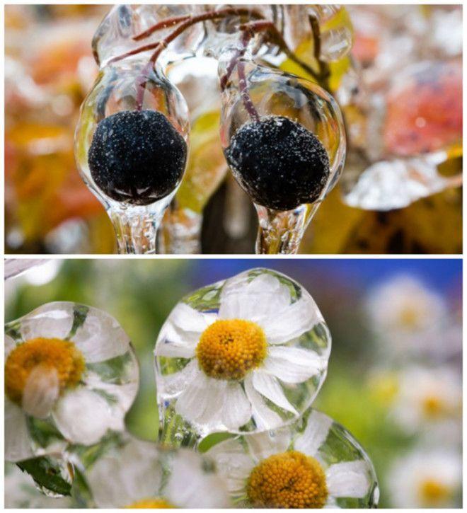 30 фото про те, що зима творить дива крутіші за фотошоп - фото 5