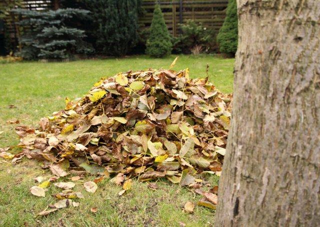 опалая листва