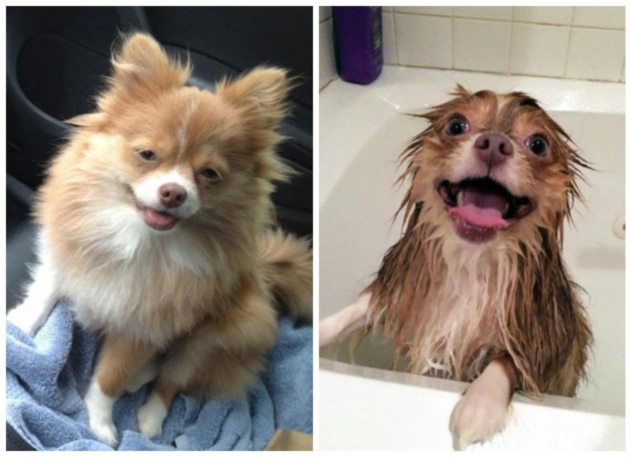 низкой до и после смешные фото если хотите вырастить