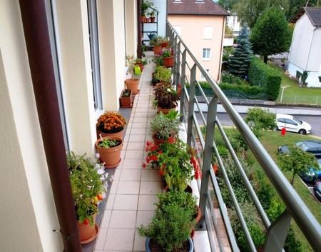 16 очаровательных сезонных идей для сада на балконе фото 10