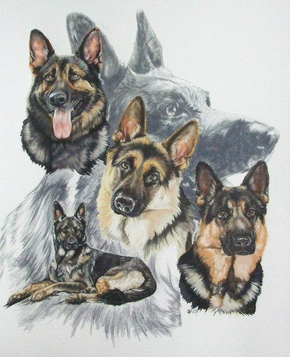 German_Shepherd_wGhost_19x24WC-CP_2009 (568x700, 100Kb)