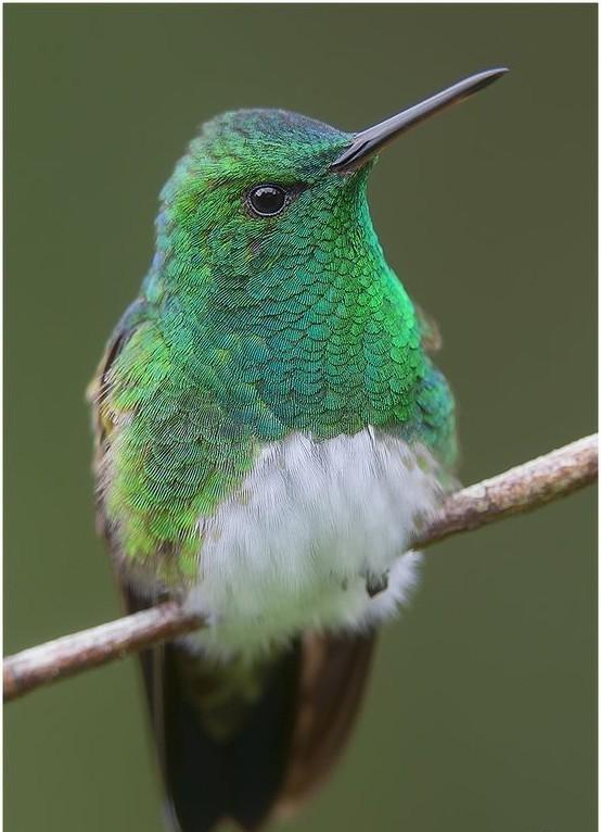 Миграции колибри - это перелет на тысячу километров менее чем за сутки интересное, колибри, природа, птицы, факты, фауна