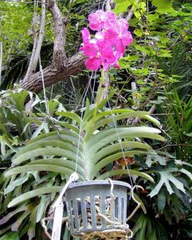 Подвесные корзины для выращивания орхидей