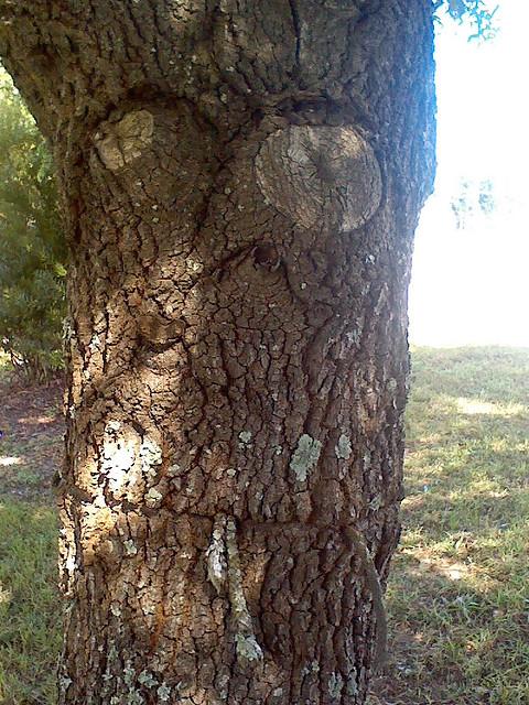 Посмотрите, как эти 20 деревьев выходят за рамки и медленно захватывают мир