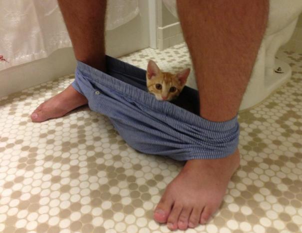 20 кошек, которые плевать хотели на твоё личное пространство