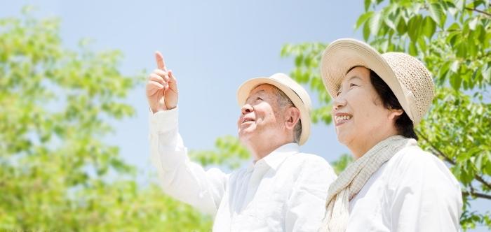 У японцев очень развито чувство прекрасного / Фото: sur.ly