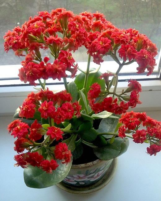 самые красивые комнатные цветы фото