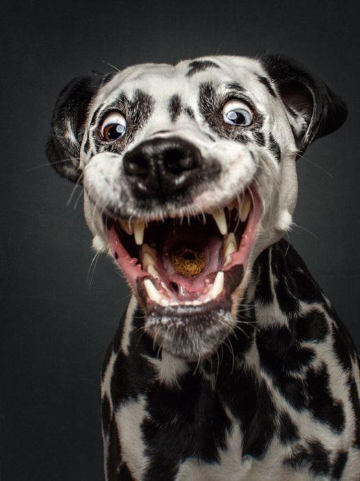 Стоп-кадр собаки животные, история, приколы, фото, юмор