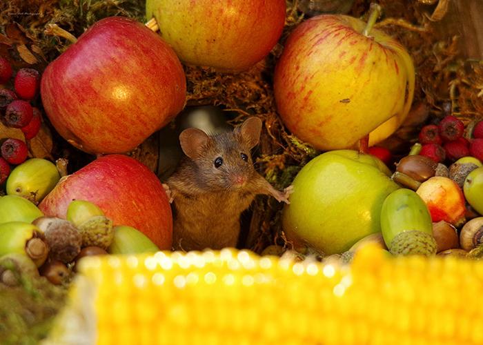 Первым грызуном, поселившимся в доме из поленьев стал Джордж.