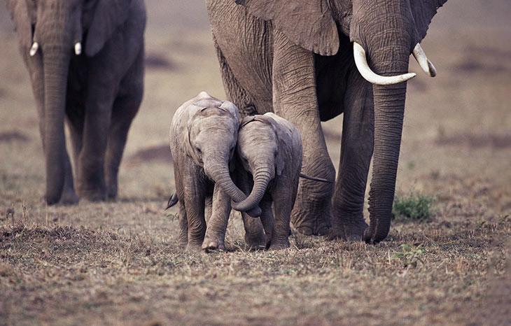 Друзья детеныши, животные, слоненок