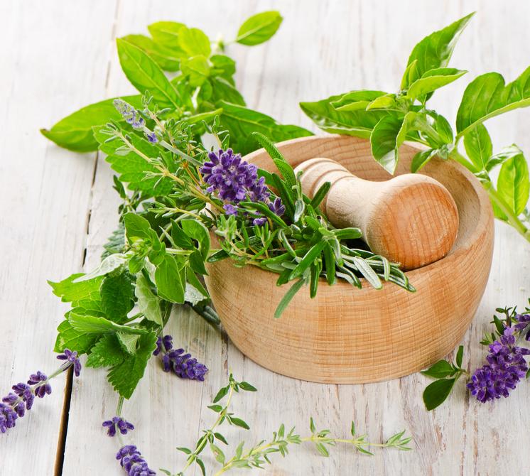 горный чай для похудения домбая и архыза