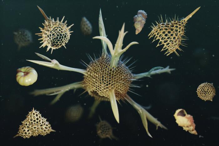 Так выглядит Radiolaria, являющаяся одноклеточным планктонным организмом. ldarro.artstation.com.