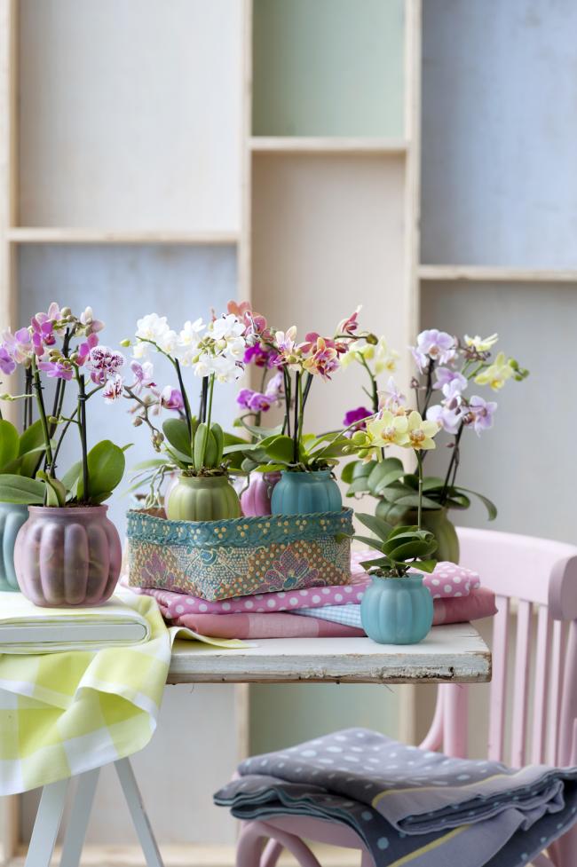 Очень милые полупрозрачные матовые пластиковые горшочки для орхидей