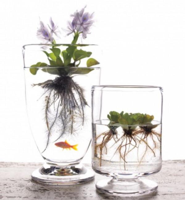 Водоплавающие растения в интерьере