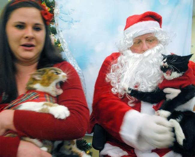 животные не рады новогодним праздникам, животные не прониклись духом праздника, животные которые не любят новый год, животные которые не любят рождество