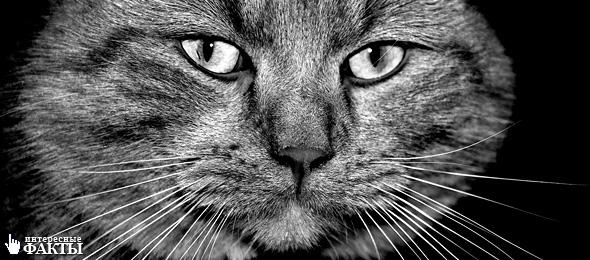 10 мифов о кошках