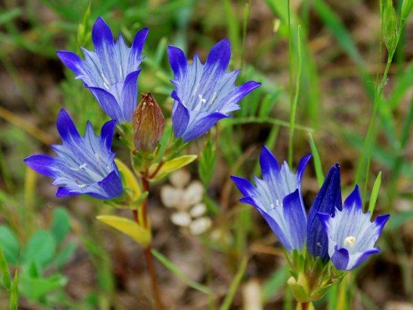 Фото садовых однолетних цветов с названиями 3