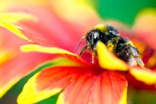 Топ-10: Удивительные факты о медоносных пчёлах