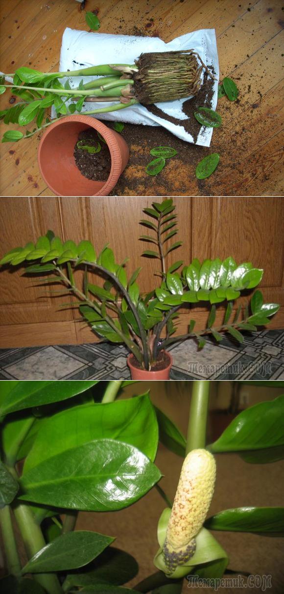 Ухаживание за растением
