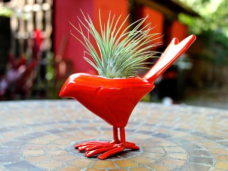 «Воздушные» растения: 14 забавных идей для дома фото 1