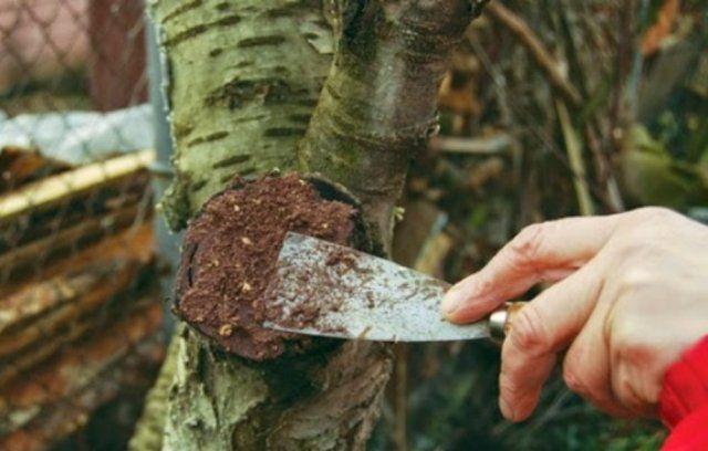 замазка дерева