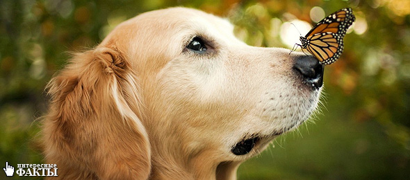 Самые невероятные способности собак. 5 интересных фактов
